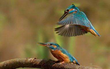 birds19