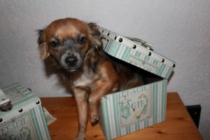 Hunde steuer in der kiste