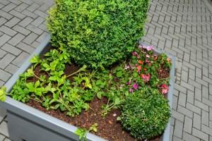 Blumenkübelpaten gesucht: Wo wenig Platz für Grünflächen ist, verschönern Blumenkübel das Stadtbild. ©2017 Archivbild Volker Watschounek
