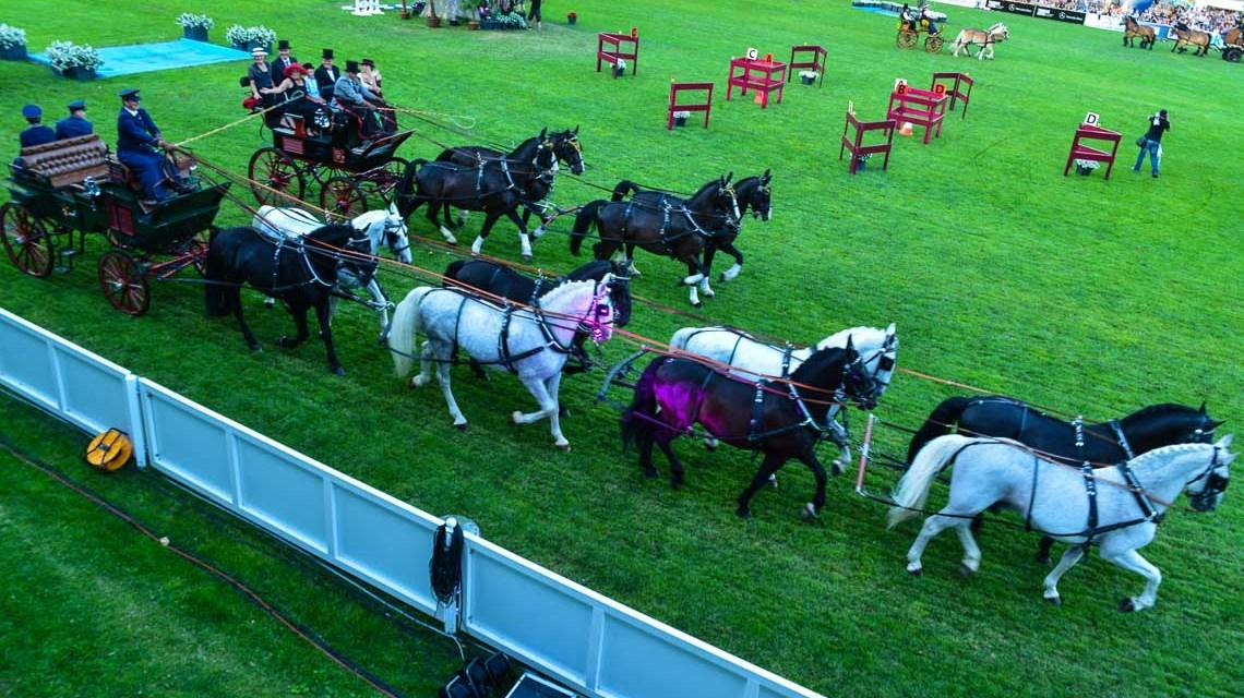 Freitag zur PferdeNacht, Ticket sichern