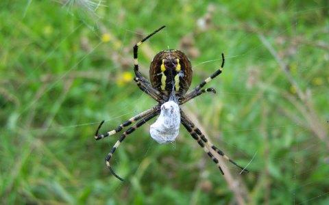 Sie spannen Netze, fangen ihre Beute darin und faszinieren – Spinnen. Bild: Christoph Baron / CC-BY / Flickr