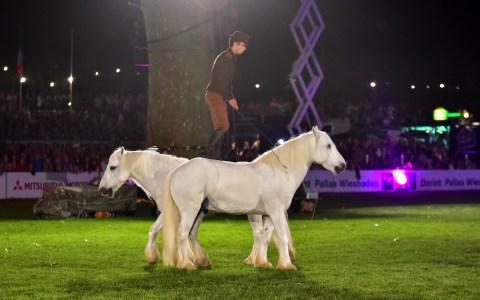 Pferdenacht : Der Franzose Pierre Fleury mit seinen Highland-Ponys aus der Normandie beim 81. Internationalen Pfingstturnier. Bild: Volker Watschounek