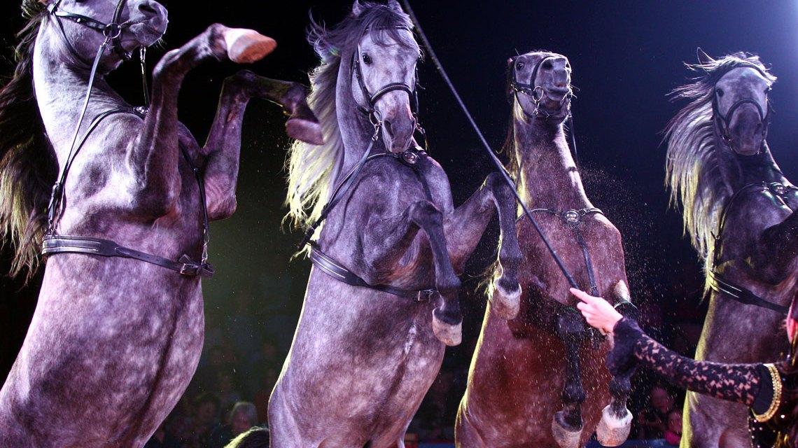 Die Junior Chefin Natascha Wille-Busch präsentiert in Wiesbaden auch ihre Pferdedressur. Bild: Circus Carl Busch