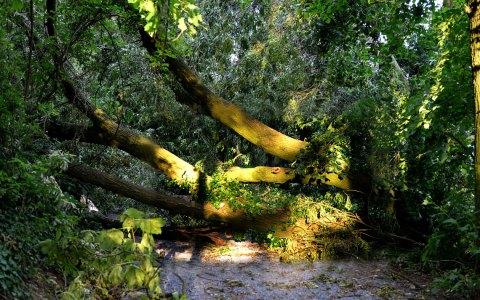 Sturmschäden, abgebrochene Äste, umgestürzte Bäume im Stadtwald. Bild: Wiesbaden lebt!