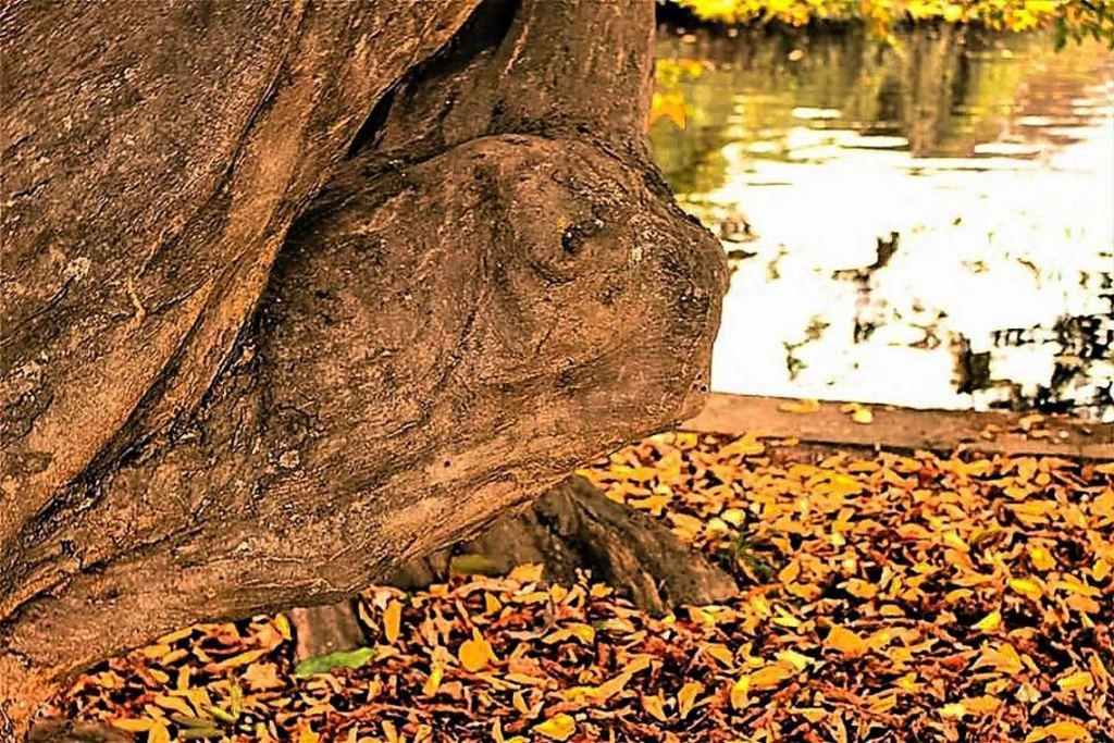 Aufmerksame Spaziergänger haben diese Trolle im Schlosspark entdeckt. Bild: FB Gruppe Wiesbaden lebt! / Gisela Michaelis