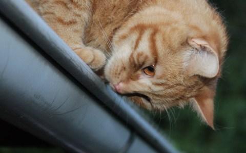 Wild streunende Katzen und ihr Balzverhalten... ©2017 Rene Schwietzke / Flickr