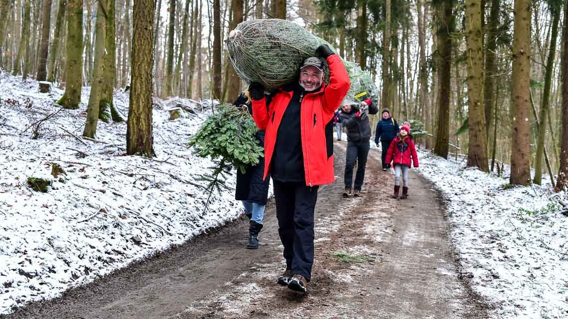 Tief im Wald eine Lichtung auf der viele kleinere Weihnachtsbäume stehen, die zum Schlagen freigegeben sind. Der Herr hatte Erfolg. @2017 Volker Watschounek
