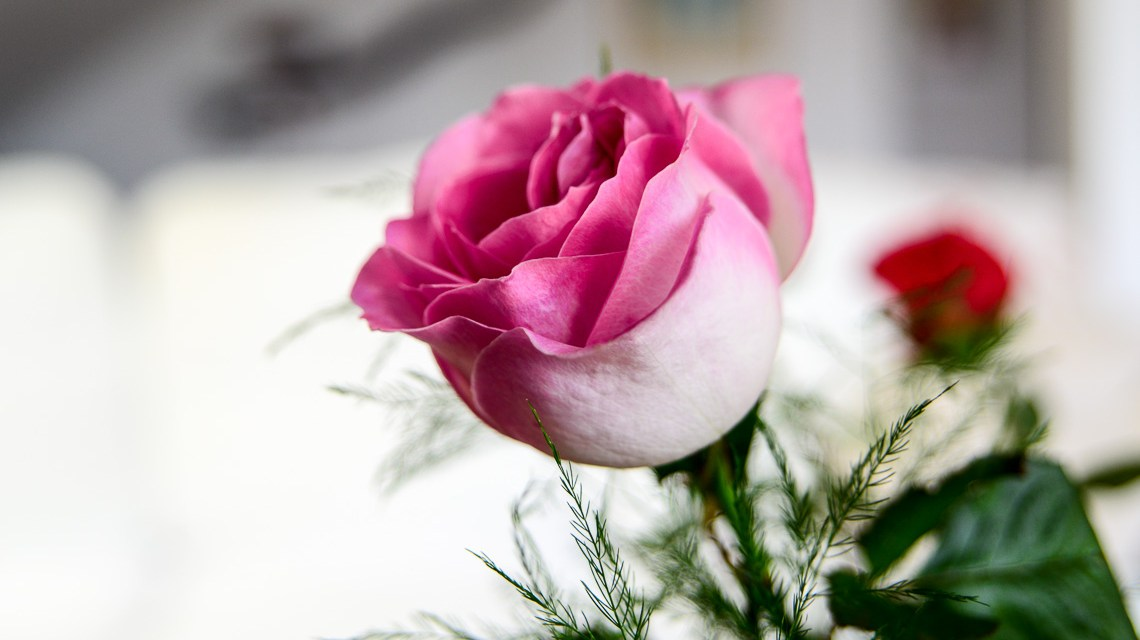 Blumen zum Valentinstag, der Klassiker. ©2018 Volker Watschounek
