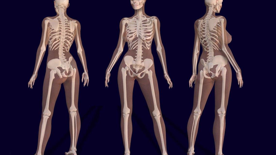 3D Renderbild eines weiblichen Skeletts mit Körperkontur. ©2018 Bernhard Ungerer / Flickr / CC BY 2.0