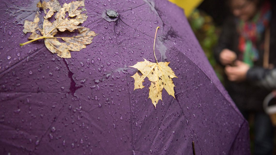 Wetter, Laub und Regen repräsentieren Herbstwetter... Im Moment herrscht Frühlingswetter. © 2018 Museum Wiesbaden