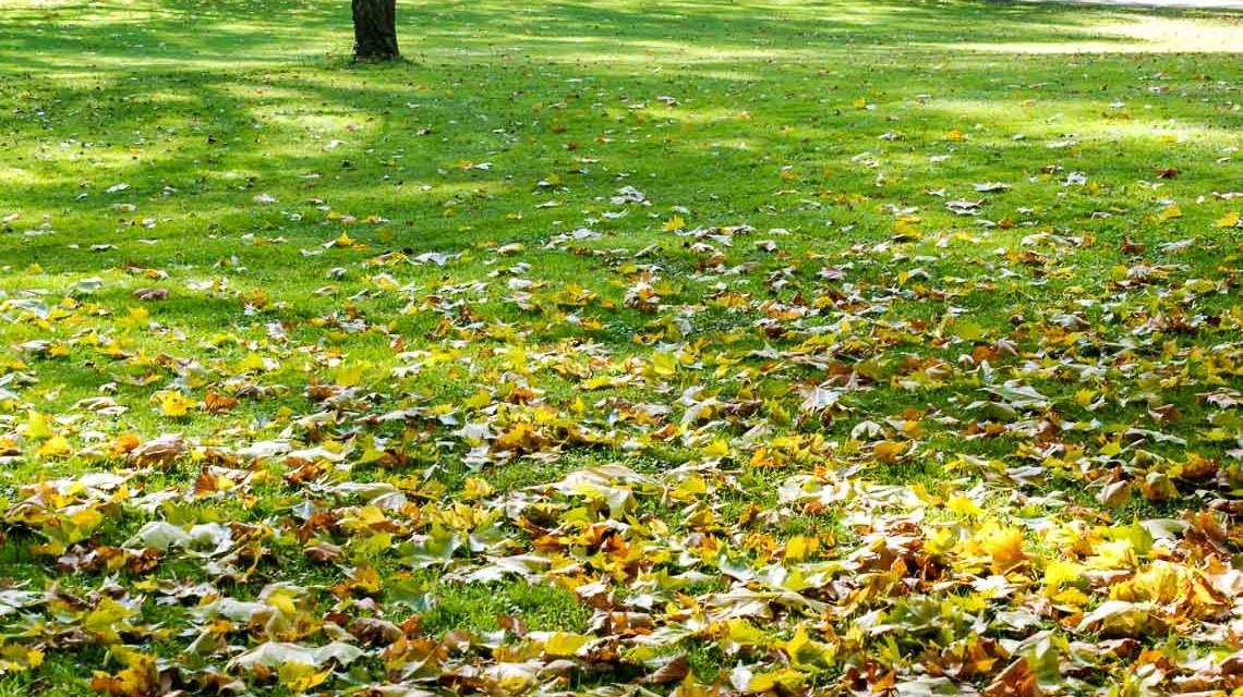 Es wird Herbst, die Blätter beginnen zu fallen. Die Jahreszeit verzaubert den Kurpark in eine Herbstlandschaft. ©2018 Volker Watschounek