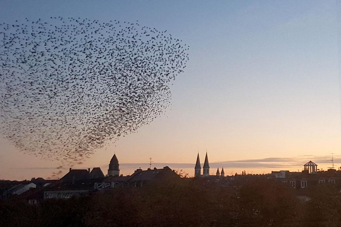 Stare in atemberaubenden Formation über Wiesbaden. ©2018 Julia Dieter