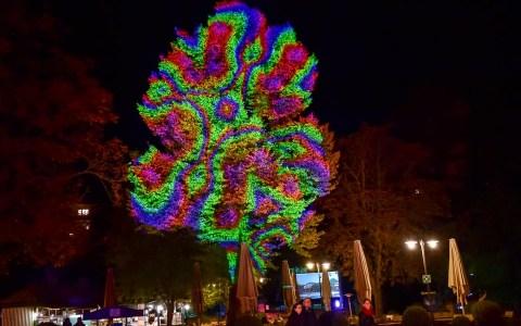 Lichtspiele – Bäume iluminiert.Foto: Volker Watschounek