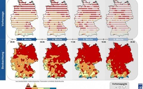 Die Abbildung stellt oben die vorhergesagte und in der unteren Reihe die tatsächliche Bodenfeuchte dar. Rot zeigt an, dass der Boden sehr trocken ist und die Bodenfeuchte einen für die Pflanzen kritischen Wert unterschreitet. Auch in den ockerfarbenen Bereichen ist mit Trockenstress zu rechnen. Je größer die Kreise oben sind, desto besser stimmt die Vorhersage mit den tatsächlichen Werten des Bodenfeuchte in der unteren Reihe überein. ©2019 DWD