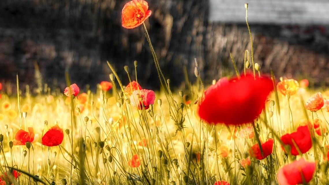 Gruene Wiese und intakte Umwselt. ©2019 flickr | PeterToporowski | cc-BY-SA-20