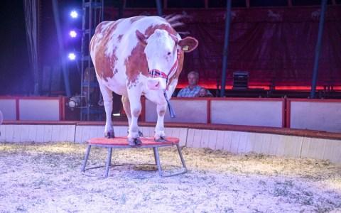Der Circus Barell gastiert bis zum 4. August in Wiesbaden in der Gibb.