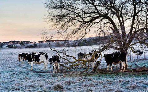 Mit kalter Luft wird der meteorologische Winteranfang angekündigt. ©2019 Wetteronline