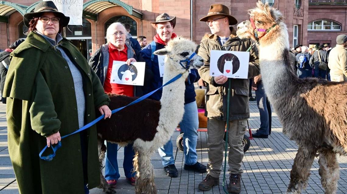 Wildlebende Wölfe kehren, politisch gewollt und begrüßt. Schäfer gehen auf die Straße.
