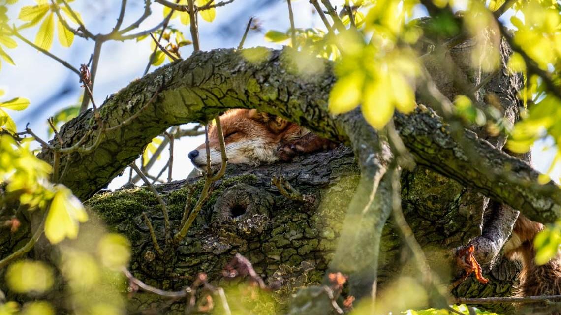 Frühlingserwachen im Biebricher Schlosspark