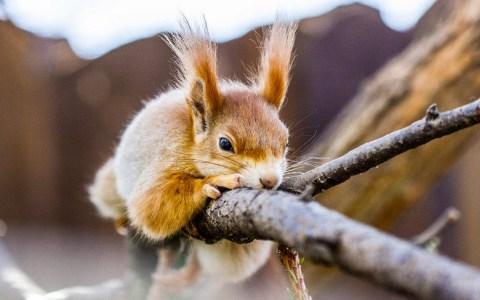 Kita Kids Camp.Kita EuropaviertelEichhörnchen auf einem Astvon Skica911 auf Pixabay