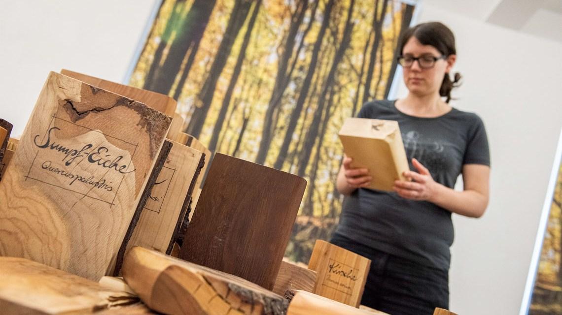 Bibliothek der Bäume im Museum Wiesbaden