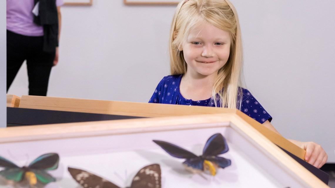 Kind in der Ausstellung Schmetterlingen auf der Spur. Foto: Museum Wiesbaden / Bernd Fickert