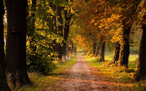 November: Herbst, Baumallee