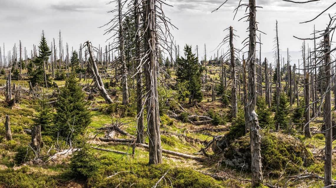 Wald - FelixMittermeier auf Pixabay