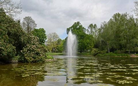 Warmer Damm Wiesbaden, grüner Teich im Vordergrund mit Wasserfontöäne.