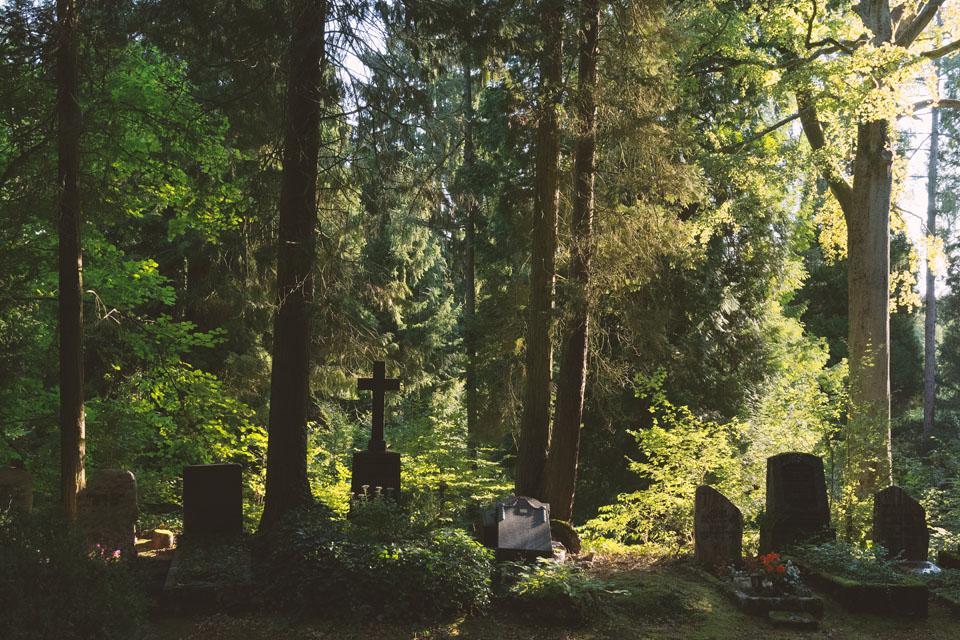 baumlandschaft-3511.jpg