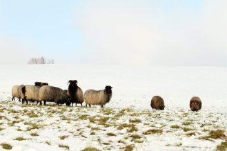 Schafe am Hang mit Wolkenauflösung