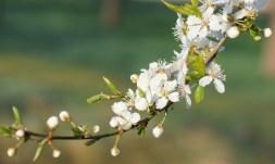Frühlingstraum....