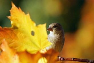 Ich seh dich... Grünfink