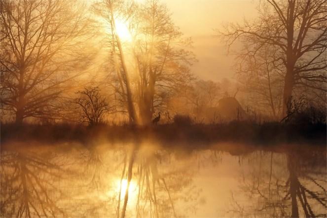 Mystisch - Kranich im Sonnenaufgang