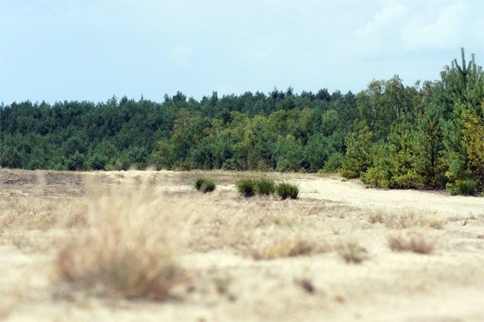 Habitat der Grabwespen