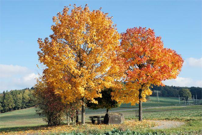 Buntes Herbstlaub ...