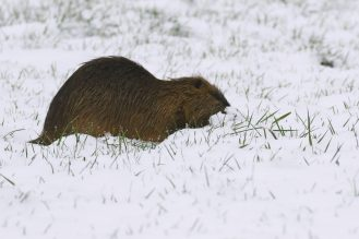 Kopf im Schnee