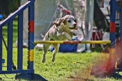 Michael Wieser Wilhemshaven - Fotografie Tiere Hunde