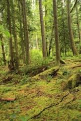 Deciduous rainforest, BC