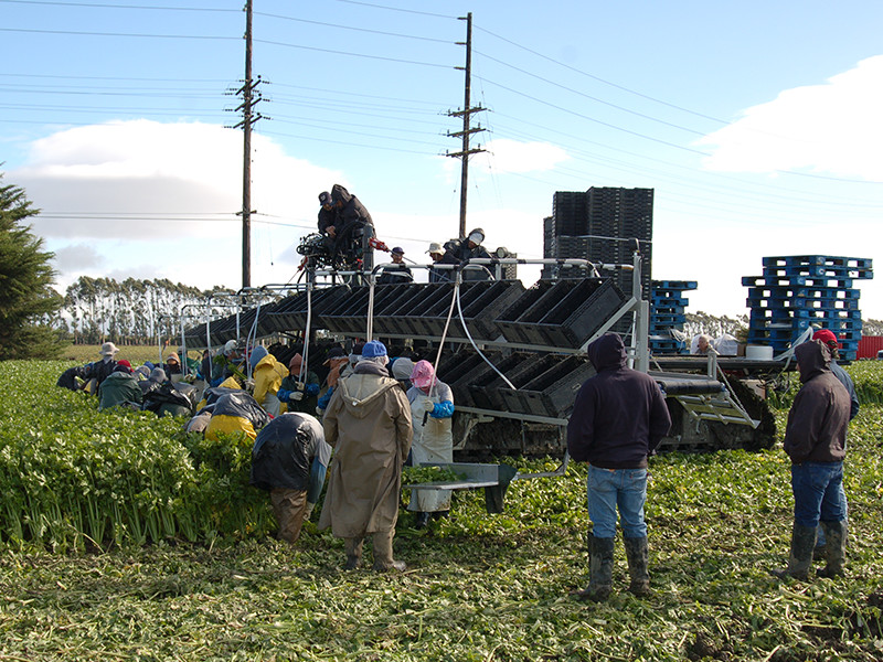 harvester-harvesting