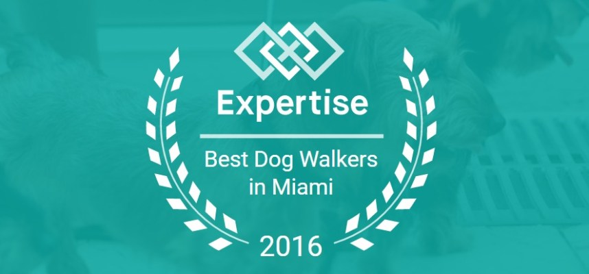 Wiggle Waggle Tails Awarded 2016 Best Dog Walkers in Miami