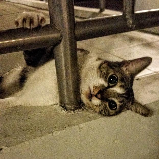 void deck cat 2