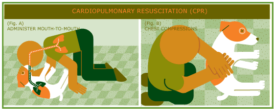 9_cpr