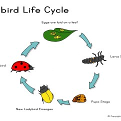Walking Stick Insect Life Cycle Diagram Sunpro Super Tach 2 Wiring The Wiggly Path Wildlife Insects Plants Animals