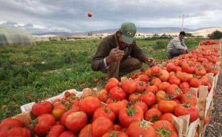 مزارعو وادي الأردن يتجهزون للامتناع عن الزراعة الموسم المقبل