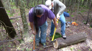 Wayne using an ax and sledge hammer to score a straight vertical line across the end of a cedar log cut to the length needed for the canoe's ribs and sheathing. Driving the axe head into the wood along this line will begin to split the log into two halves (Photo Credit: Colin Connors)