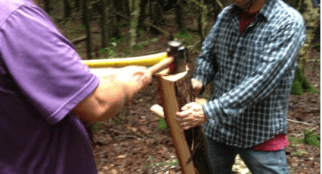 Once the log has been cut into quarters and is lighter to handle, the work of further splitting continues by holding the log vertically. A single log quarter can be split into only one or at most a few planks suitable for the canoe's ribs or sheathing (Photo Credit: Thomas A. DuBois)