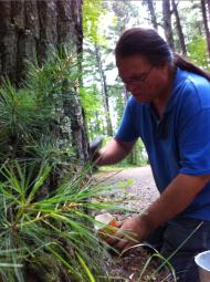Wayne collecting pine pitch (Photo Credit: Tim Frandy)