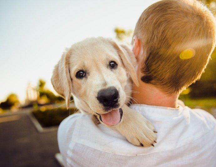 hond op schouder
