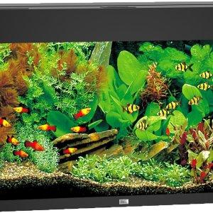 Juwel Rio 125 aquarium